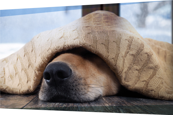 Boom, Bangs & Barks: What to do if your pet has noise anxiety
