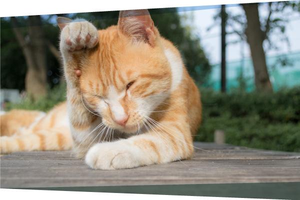 Preventing Fleas & Ticks as Summer Approaches
